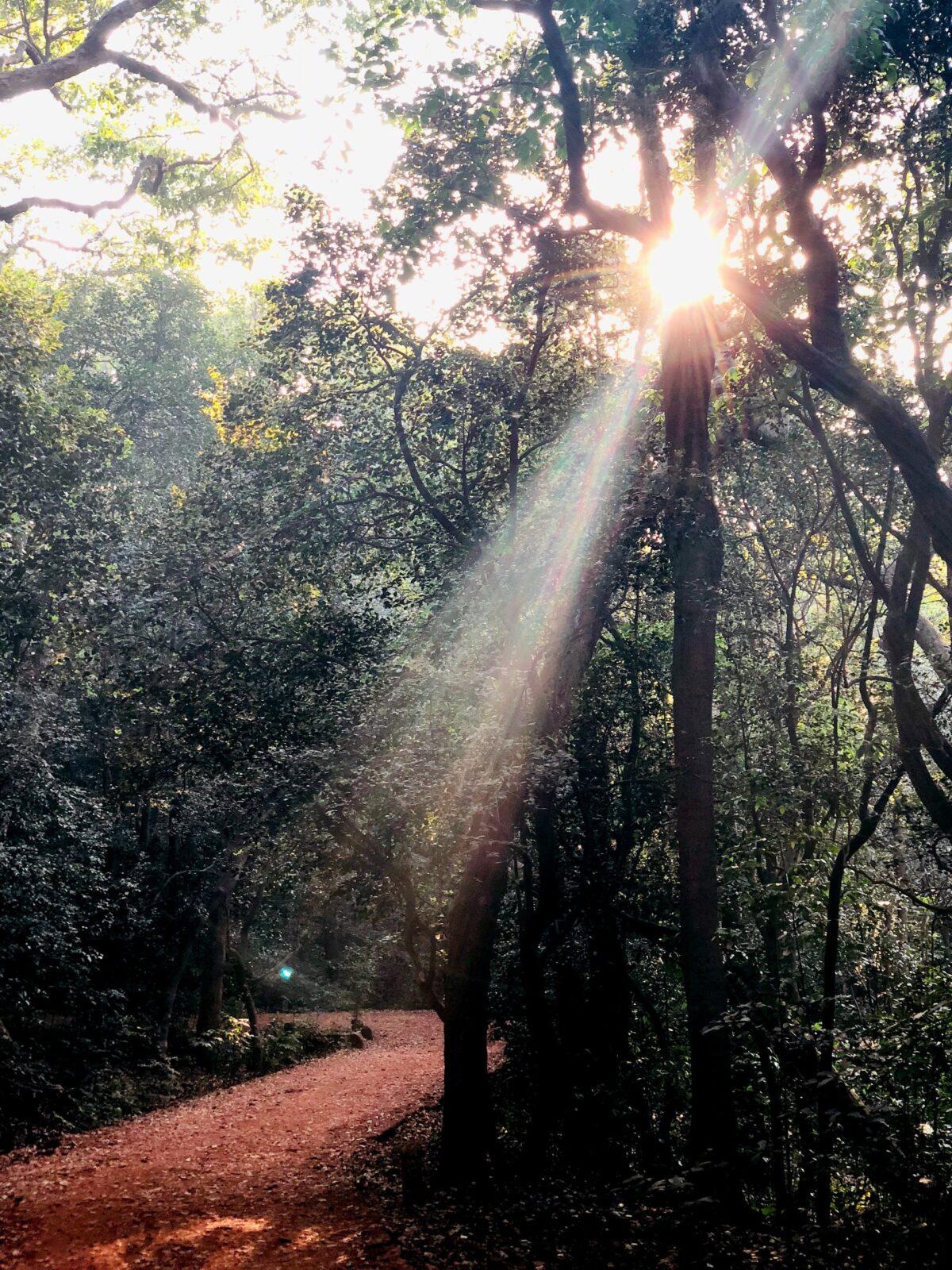 Bæredygtighed: Sådan opnår du en grønnere hverdag